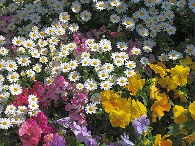 0505 flower