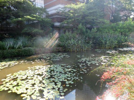 イングリッシュガーデンの池