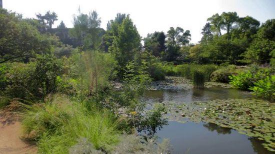 庭園の中央にある池