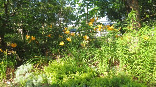 garden0708_07