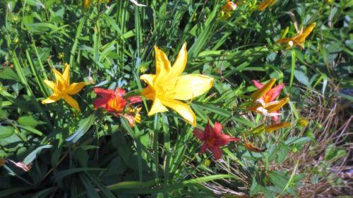garden0708_f01