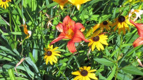 garden0708_f02