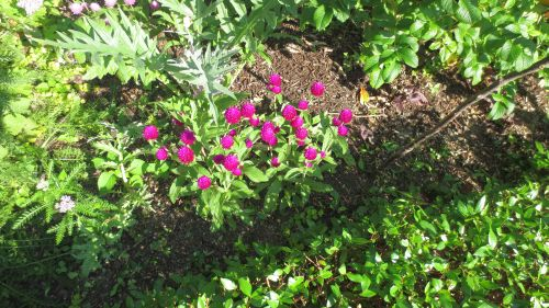 garden0708_f04