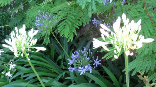 garden0708_f06