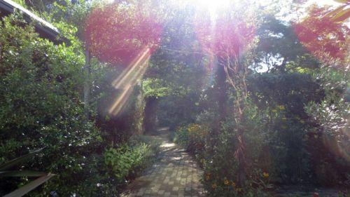 gardens_0710
