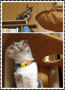 本棚のてっぺんにいるルナを見守るマール