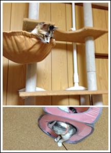猫タワーの上から、下で遊ぶマールを見るルナ