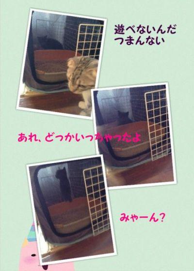 cats 20140924 2