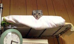 さらにタオルを敷き詰める