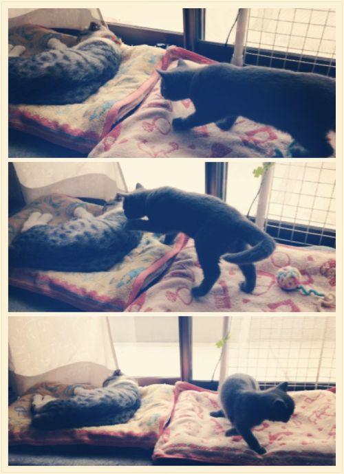 寝ているマールにタッチしてクルリと向きを変えるルナ
