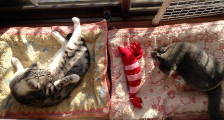 朝日を浴びてまどろむ猫ず