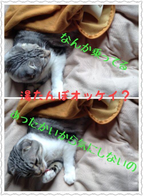 ごろごろぬくぬく可愛い。それが猫の生産的な過ごし方です。