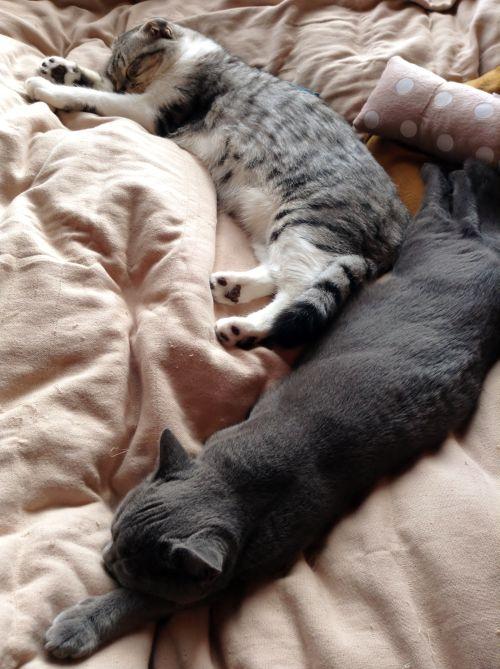 我が家流猫団子