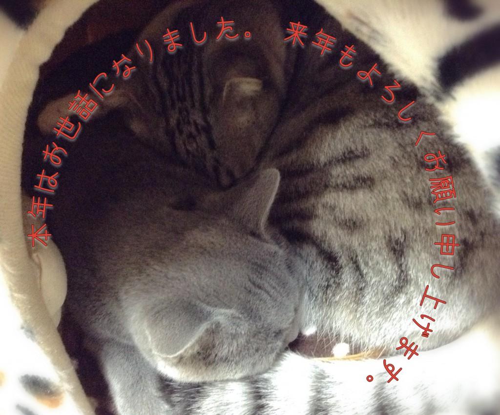 ドーム型猫ベットは2つあるのに、ギュウギュウと詰める