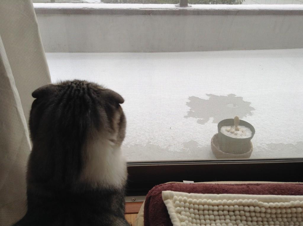 1月3日の朝 雪が溶け出した